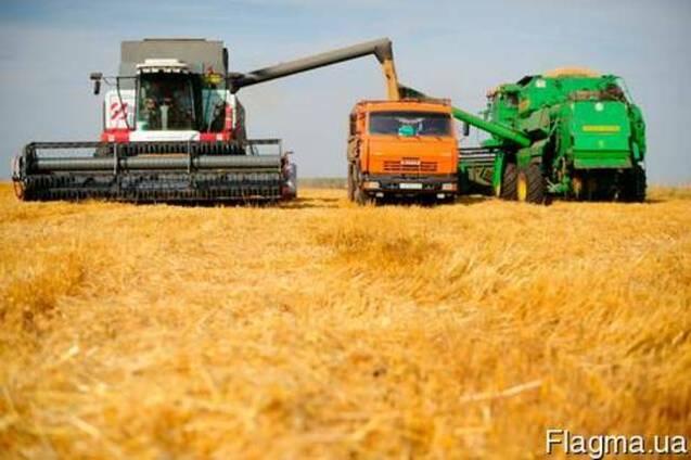 Подсолнечник, пшеницу, ячмень