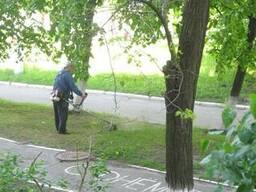 Покос травы в Киев. Стрыжка газона цена.