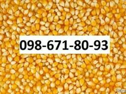 Куплю кукурузу Хмельницкий Украина