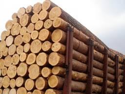 Покупаем лес кругляк хвойных пород на постоянной основе