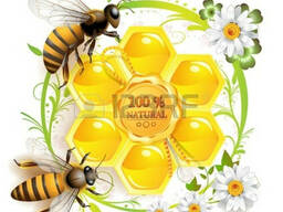 Покупаем подсолнечный мед, дорого!!!