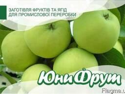 Покупаем яблоки. Урожай 2018
