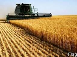 Покупаем зерновые и масличные культуры у производителя, доро