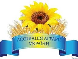 Покупаем зерновые и масличные по всей Украине на постоянно