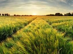 Покупка: права на землю/фермерское хозяйство от 100 до 500 га в Черкасской обл.