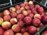 Польское яблоко от производителя La-Sad - фото 5