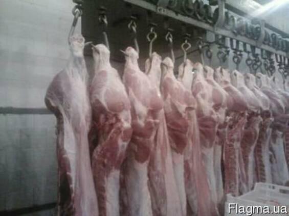 Полутуши свинные: обрезные, в шкуре