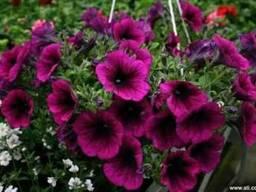 Посадка цветов, уход за клумбами, продажа цветов, услуги лан