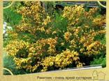 Посадка растений в Севастополе - фото 1