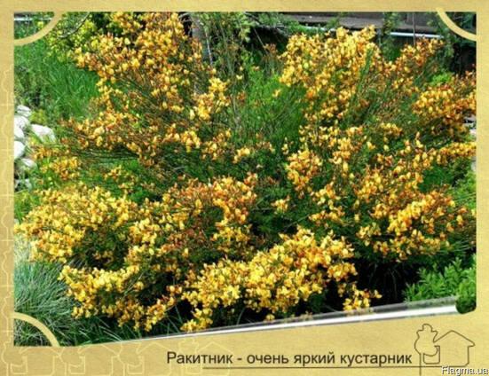 Посадка растений в Севастополе
