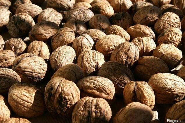 Посадковий матеріал сортових грецьких горіхів
