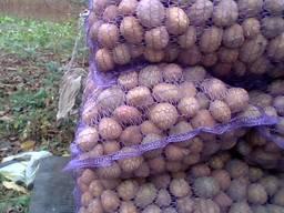 Посадочная картошка, 2 тонн картопля, бульба, картофель