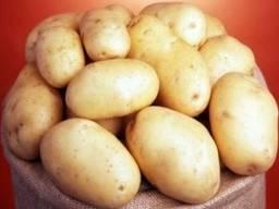 Поставки Картофеля оптом