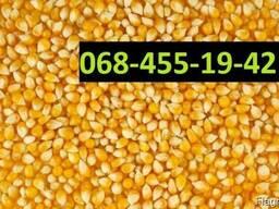 Куплю кукурузу Тернополь Украина