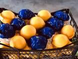 Предлагаем апельсины. Происхождение: Египет. - фото 3
