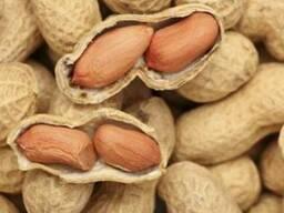 Предлагаем арахис от производителя из Китая