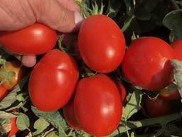 Предлагаем Овощи Помидоры, Лук, Чеснок, Морковь, Свекла