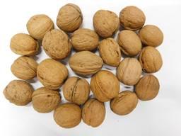 Предоставляем услуги по переработки Грецкого ореха в скорлупе на экспорт и внутри страны!