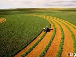 Предприятие купит у производителя зерно, дорого