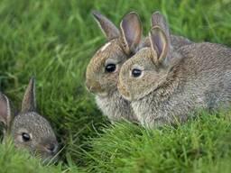 """Премікс для кролів """"ШенМікс Раббіт"""" 2,5% з пробіотиком"""