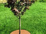 Приствольный круг EuroCocos из кокосового волокна диаметр. .. - фото 7