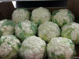 Продаем цветную капусту оптом, мелким оптом