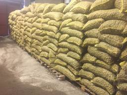 Продаем грецкий орех на экспорт