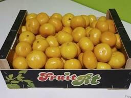 Продаем мандарины оптом