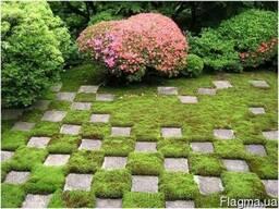 Продаем мох для озеленения притененных участков