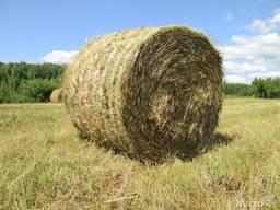 Продаем сено луговое и полевое недорого. есть опт и розница.