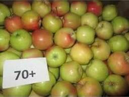 Продаем яблока разных сортов оптом и в розницу