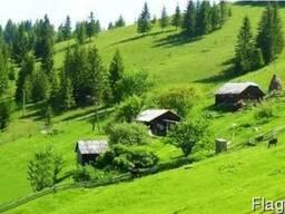 Продается хозяйство с роскошным земельным участком 400 соток