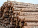Продается лес в Арцизе: брус, доска , кругляк, полуобрез - фото 3