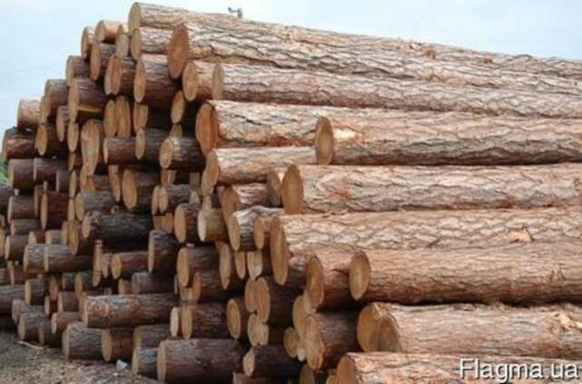 Продаю лес кругляк, свежепил, сухостой