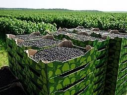 Продается плантация черной смородины Киевская обл