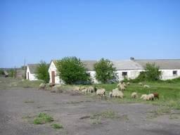 Продается животноводческий комплекс Николаевская обл.