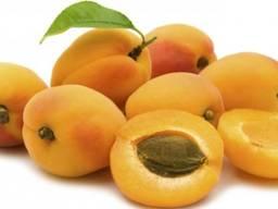 Продам абрикос крупным оптом!