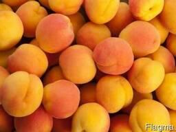 Продам абрикосы оптом 2018