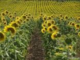 Продам Агробизнес - фото 1