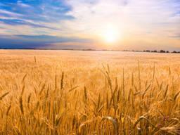 Продам агропредприятие в Ровенской области - 4700 га
