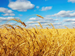 Продам агропредприятие во Львовской области с банком земли 2800 га