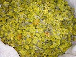 Продам бессмертник песчаный(цмин песчаный), цвет