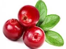 Продам бруснику свежую и свежемороженную, ягоды (брусниця)