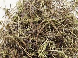 Продам Чабрец траву