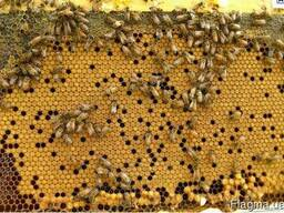 Продам часть своих пчёл