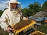 Продам часть своих пчёл - фото 2