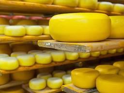 Продам Действующий Сырный завод в Днепропетровской Области