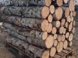 Продам дрова береза, продам дрова берёза, кругляк - фото 4