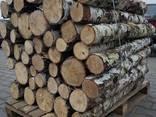 Продам дрова береза, продам дрова берёза, кругляк - фото 5
