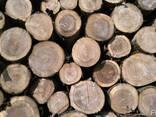 Продам дрова Дуб. Дубовые Рубленые или метровые. - фото 1